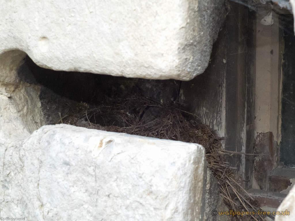 Birds Nest In Arrow Slit
