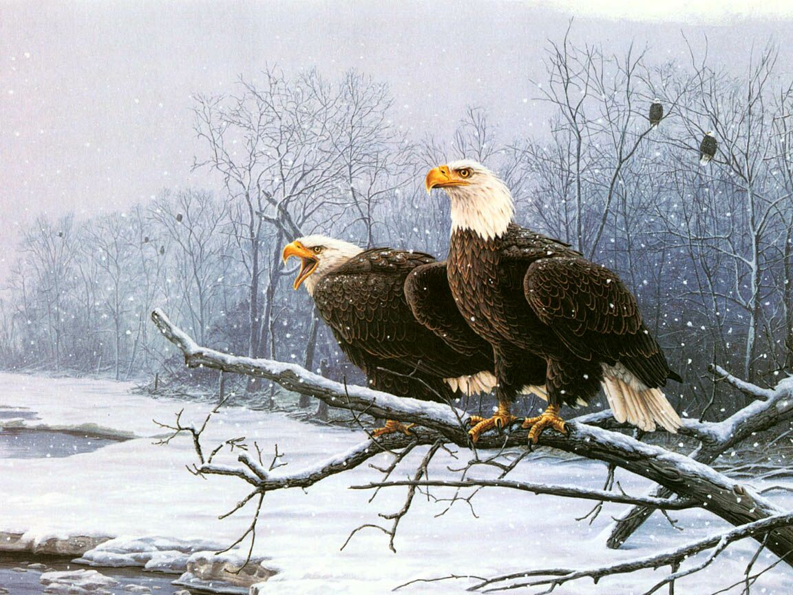 Eagle Pair Near Snowy River