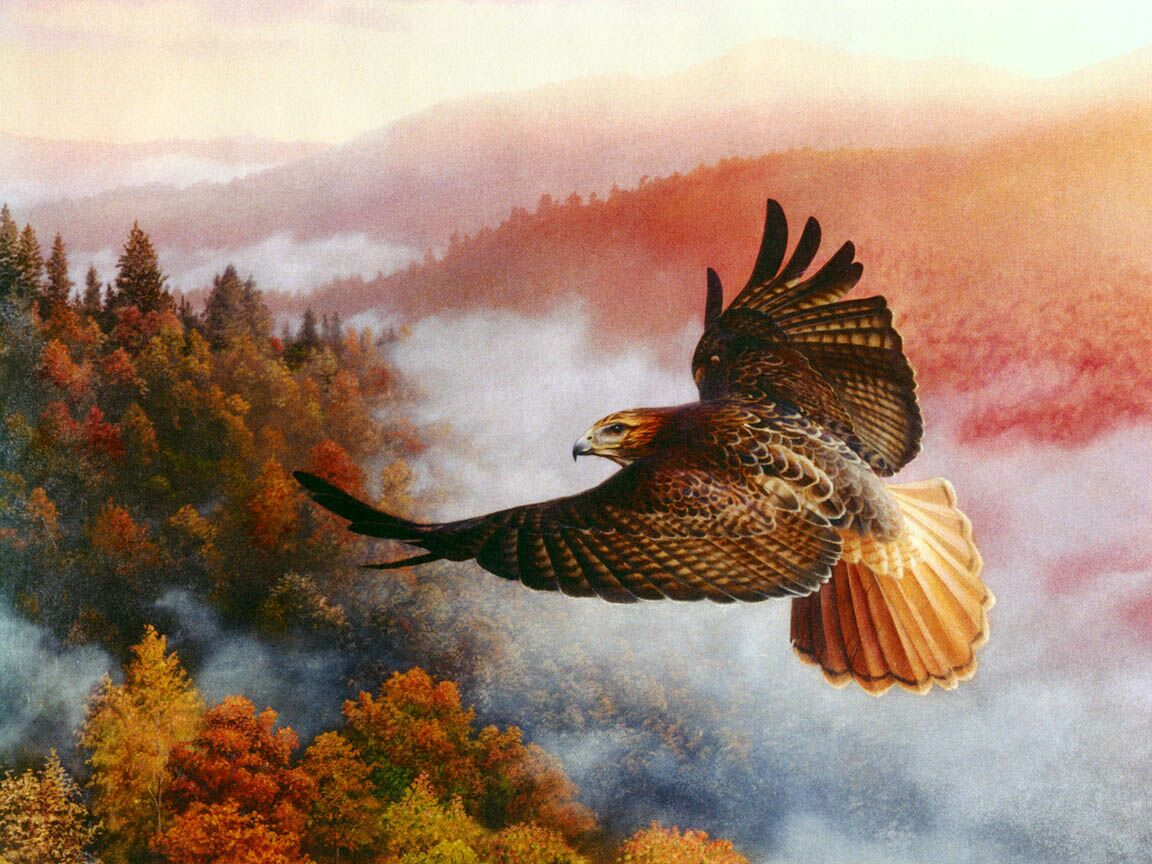 The View Red Tail Hawk