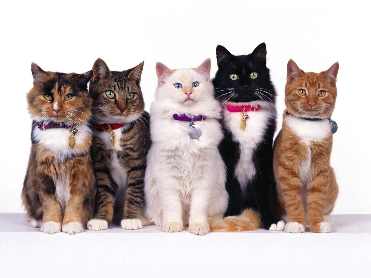 Fancy Felines Lined Up In Their Sunday Best