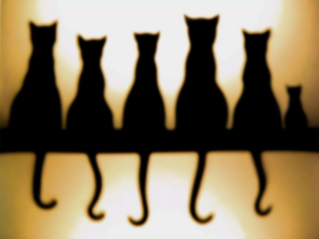 Cats In A Row