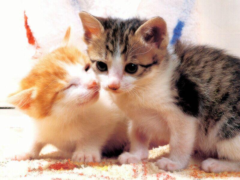 Kitten Neko
