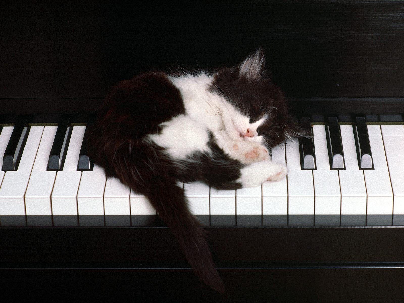 ピアノで眠る子猫。
