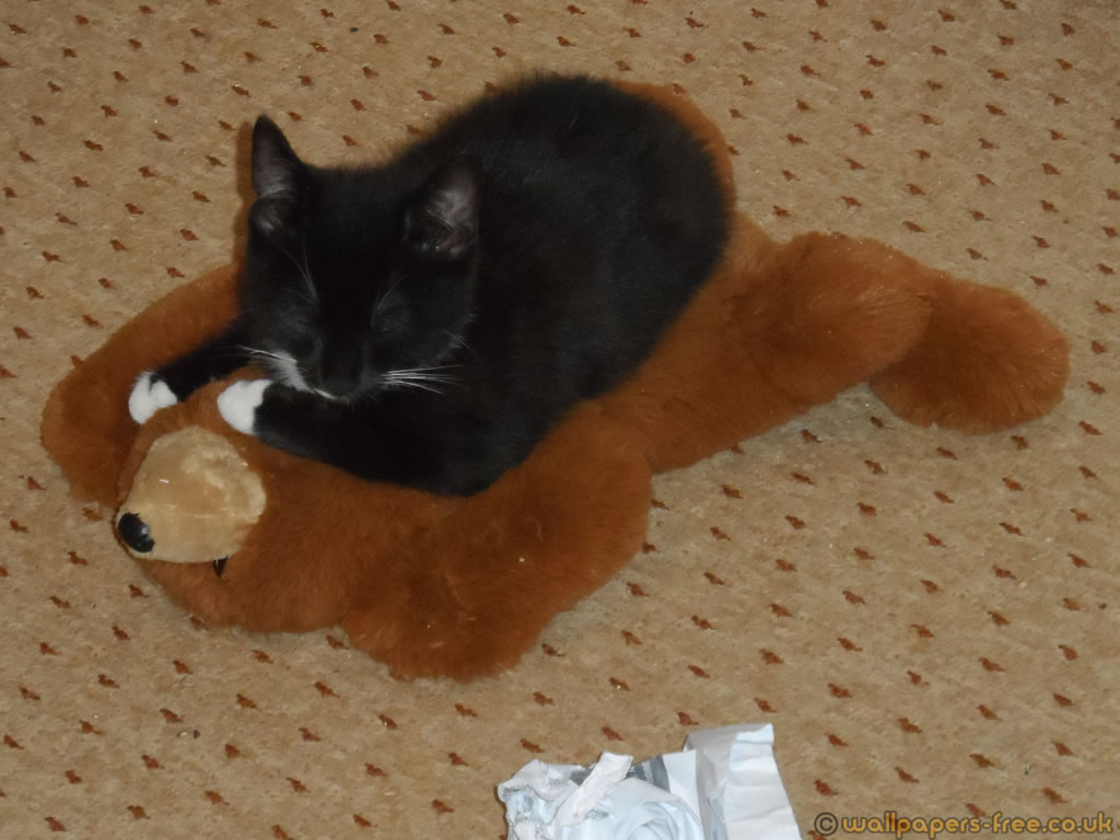 Kitten Sleeping On Teddy Bear