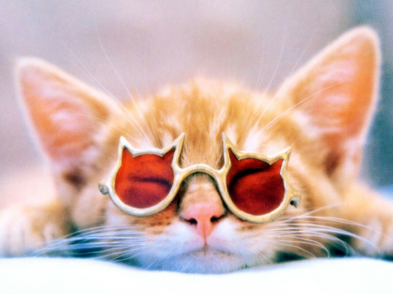 kitten-wearing-sunglasses.jpg
