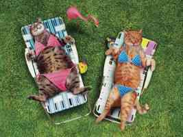 Sun tanned Catsl