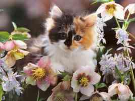 kitten in flower