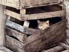 tabby cat sleeping in packing crates