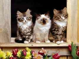 three kittens on a window ledge