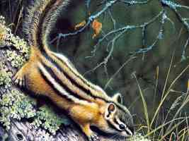 Chipmunk HarroMaass