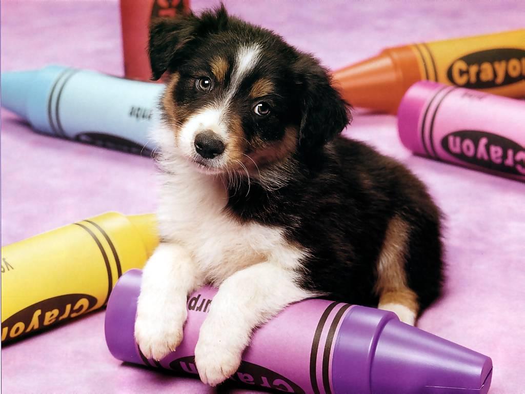 Crayon Pup