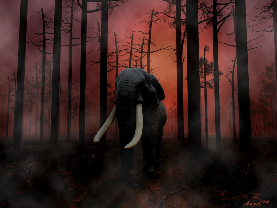 Elephant In Forest Fire