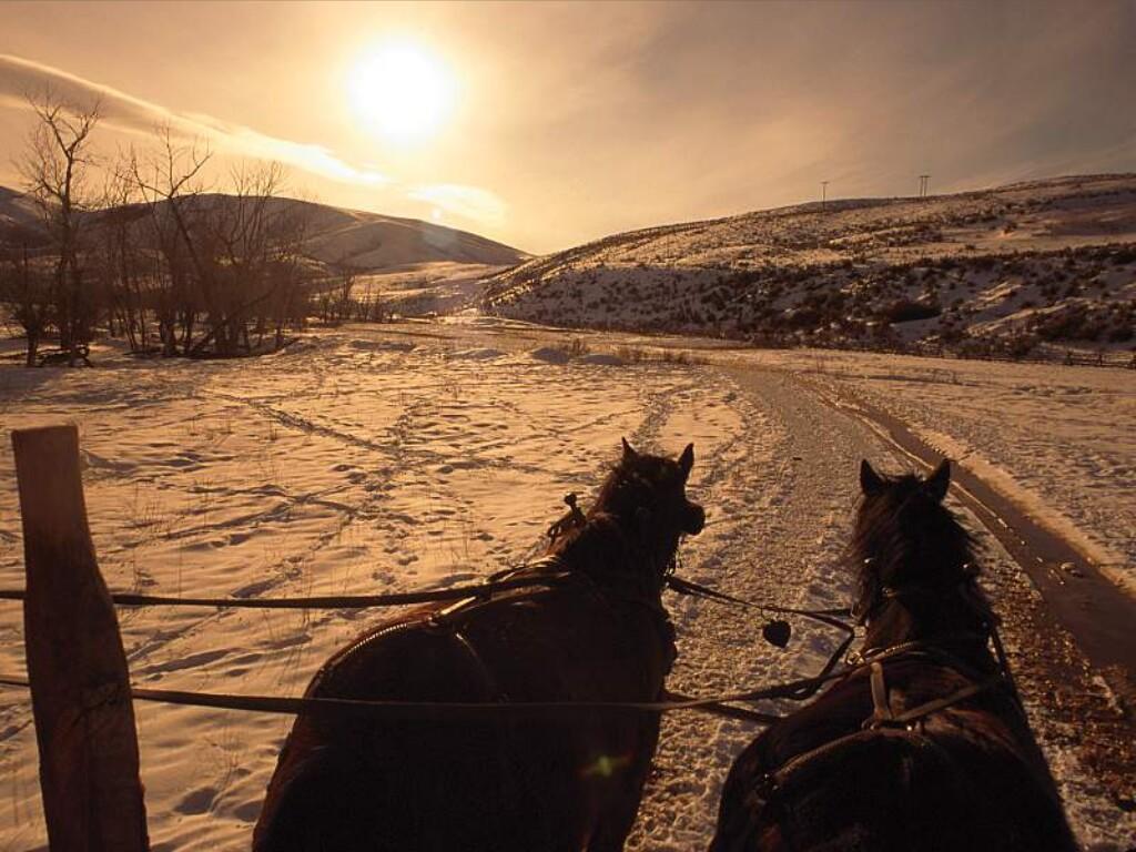 Horse Early Morning Hay Wagon Idaho