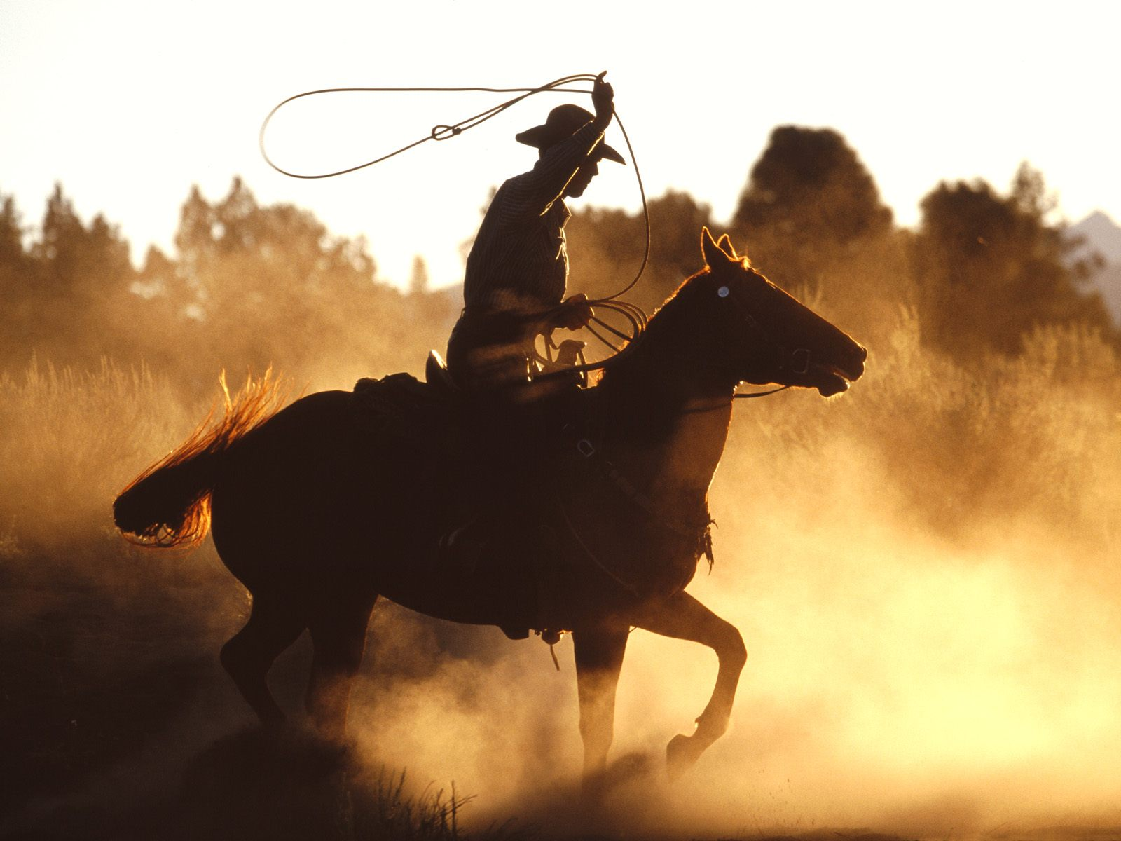 Horses Western Glory