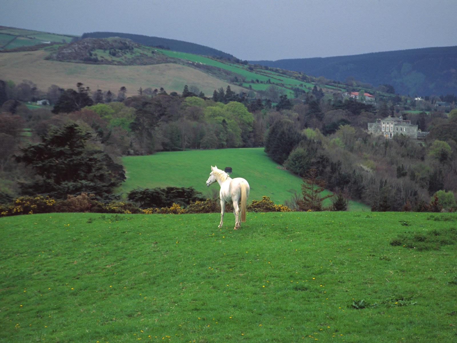 Wicklow Countryside Near Powerscourt Castle Ireland
