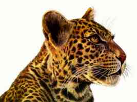 Leopard Art Francien wall