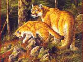 Mountain Lions wall