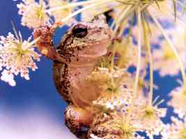 Wildlife019 Frog