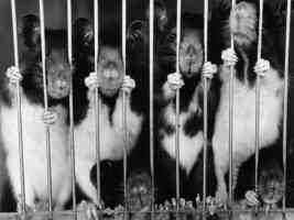 rodents in jail