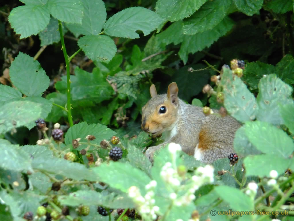 Squirrel Eating In The Undergrowth