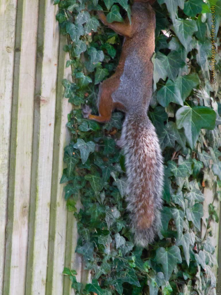 Squirrel Lost His Head
