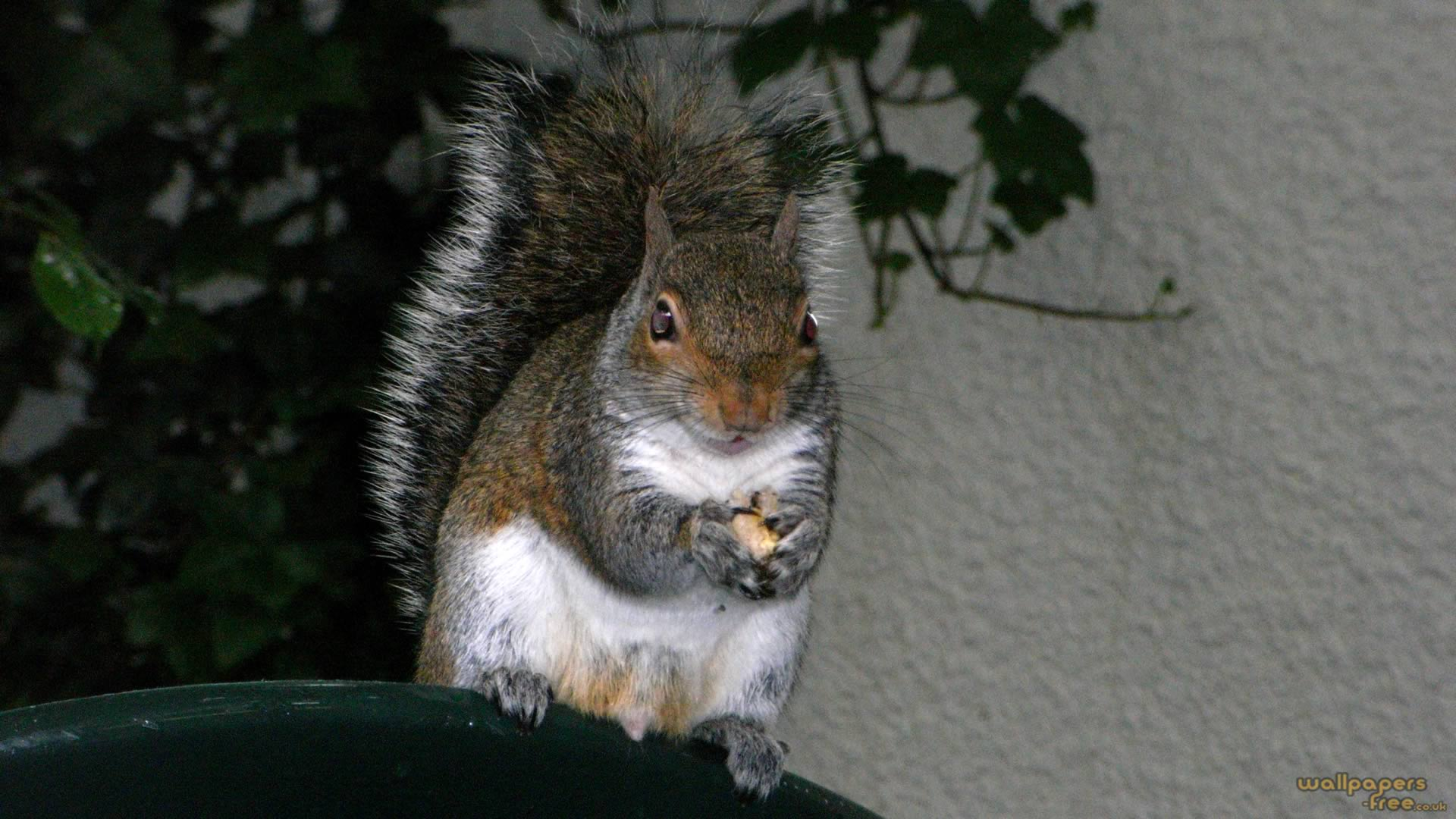 Squirrel Sitting On End Of Chair