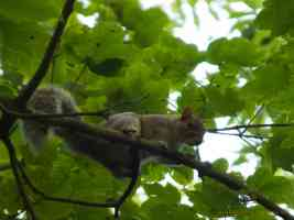 squirrel balancing on branch