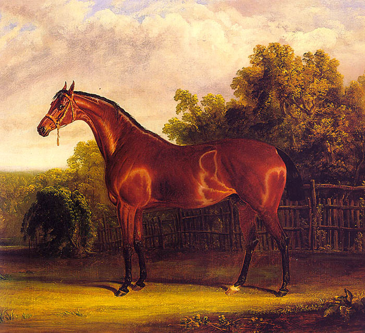 Negotiator The Bay Horse In A Landscape