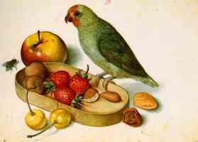 still life with pygmy parrot