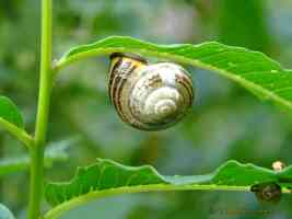 snail hanging from leaf