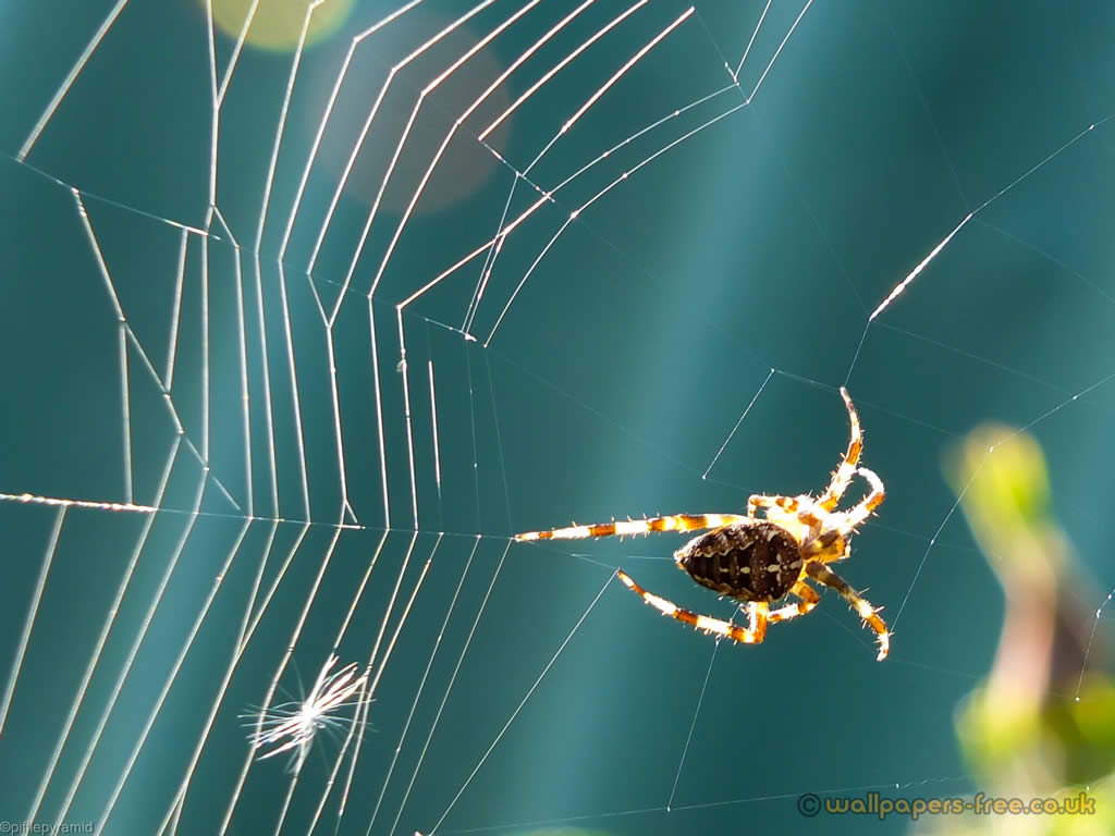 Spider And Web In Sunlight
