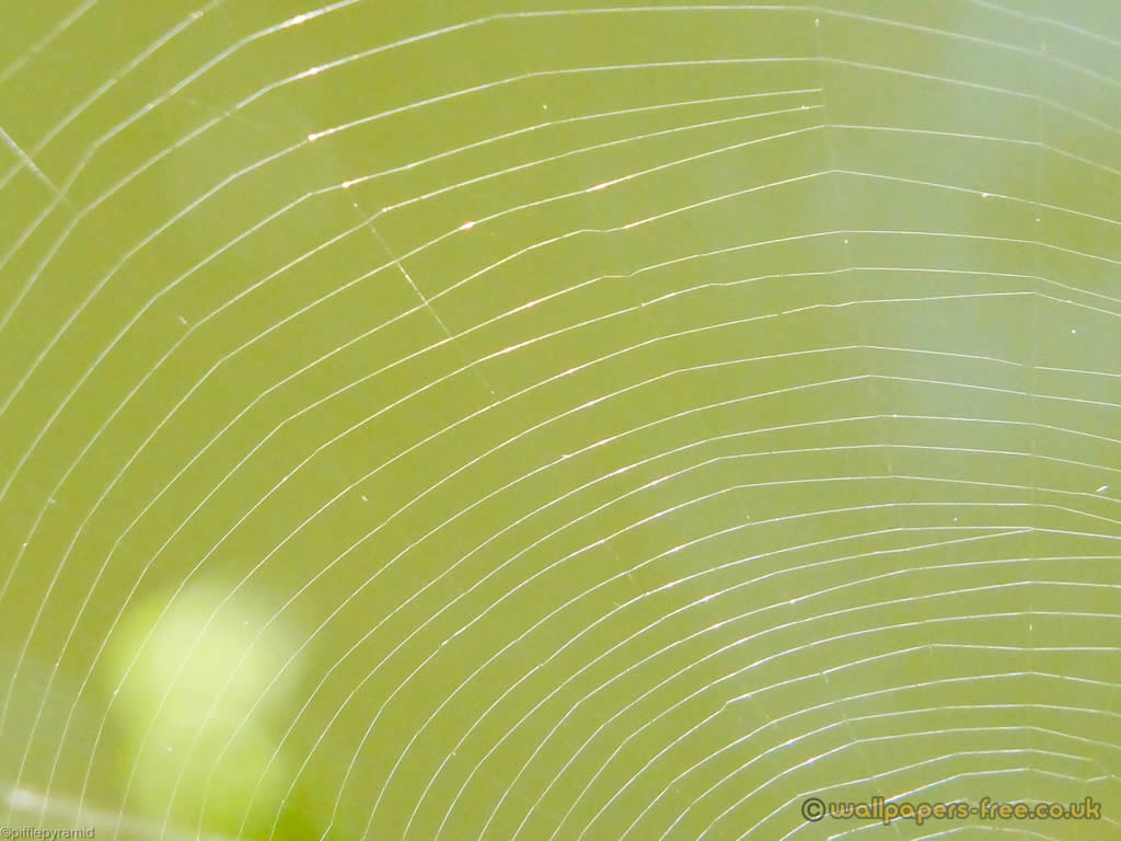 Spiders Web Highlighted By Sunlight