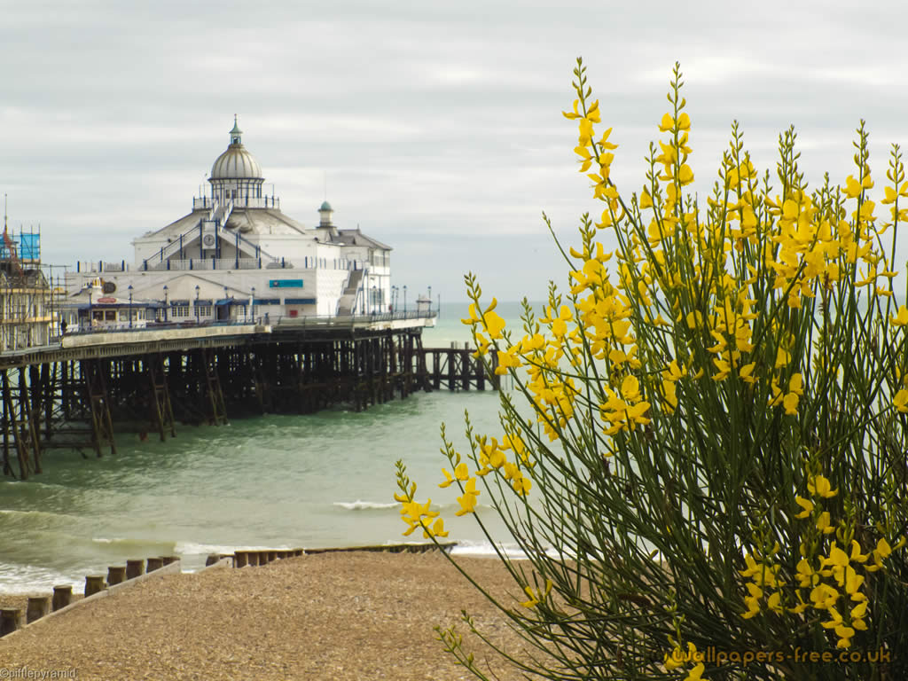 Eastbourne Pier And Yellow Flowers