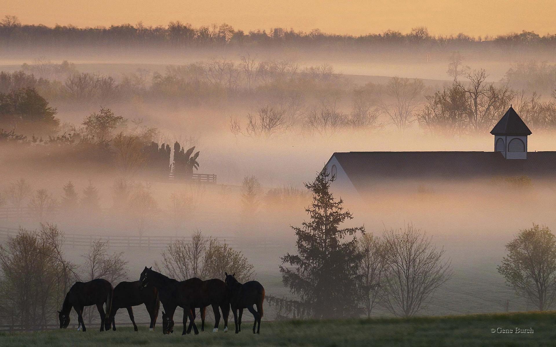 Foggy horse farm farms wallpaper for Horse farm