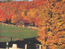 barn among autumn trees