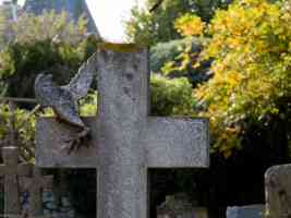 cross gravestone and dove