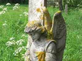 stone winged angel and lichen