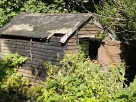 overgrown old shed