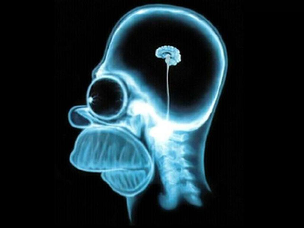 Simpsons Homers Brain