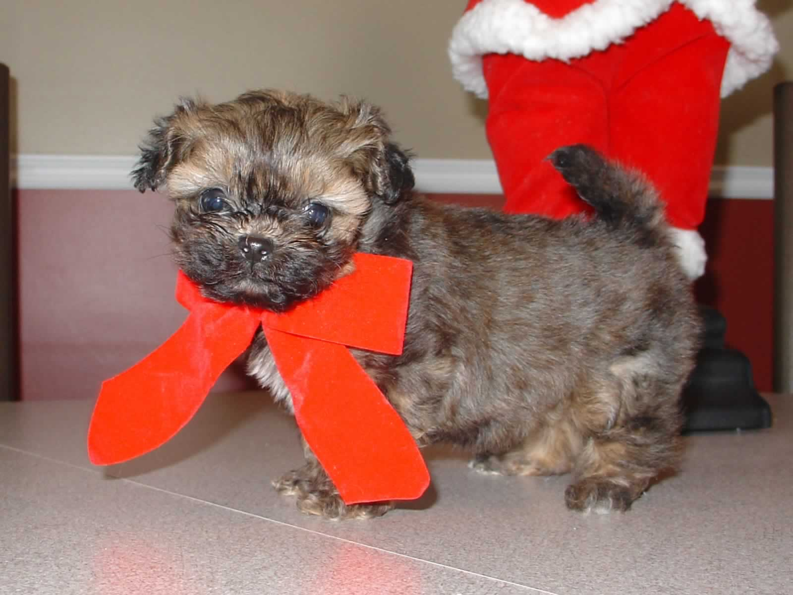 Puppy In Christmas Bow