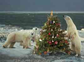 polar bears Wild About Christmas