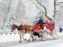 Hansom Cab Central Park New York