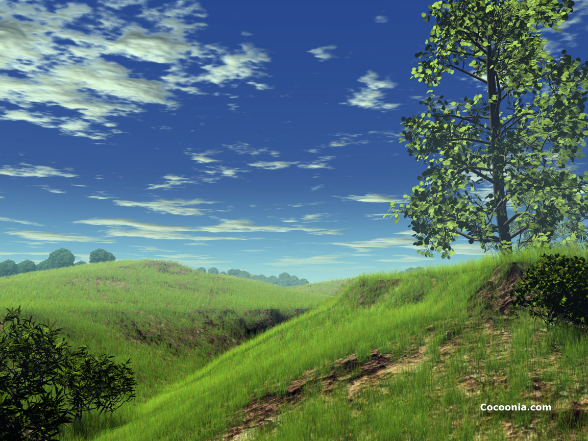 Cocoonia  Greenest Hills