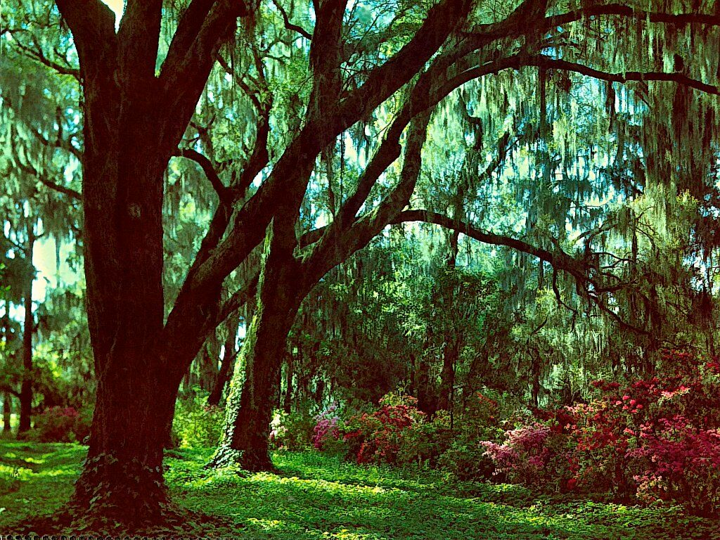 Magnolia Gardens South Carolina