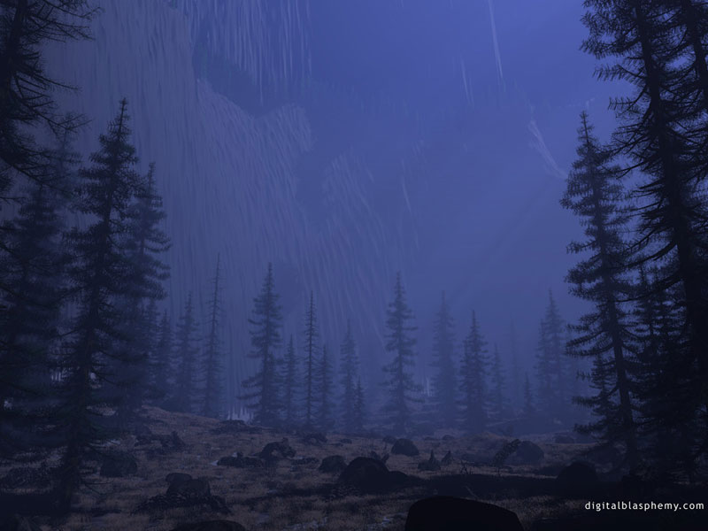 Coniferous Forest At Night Rain