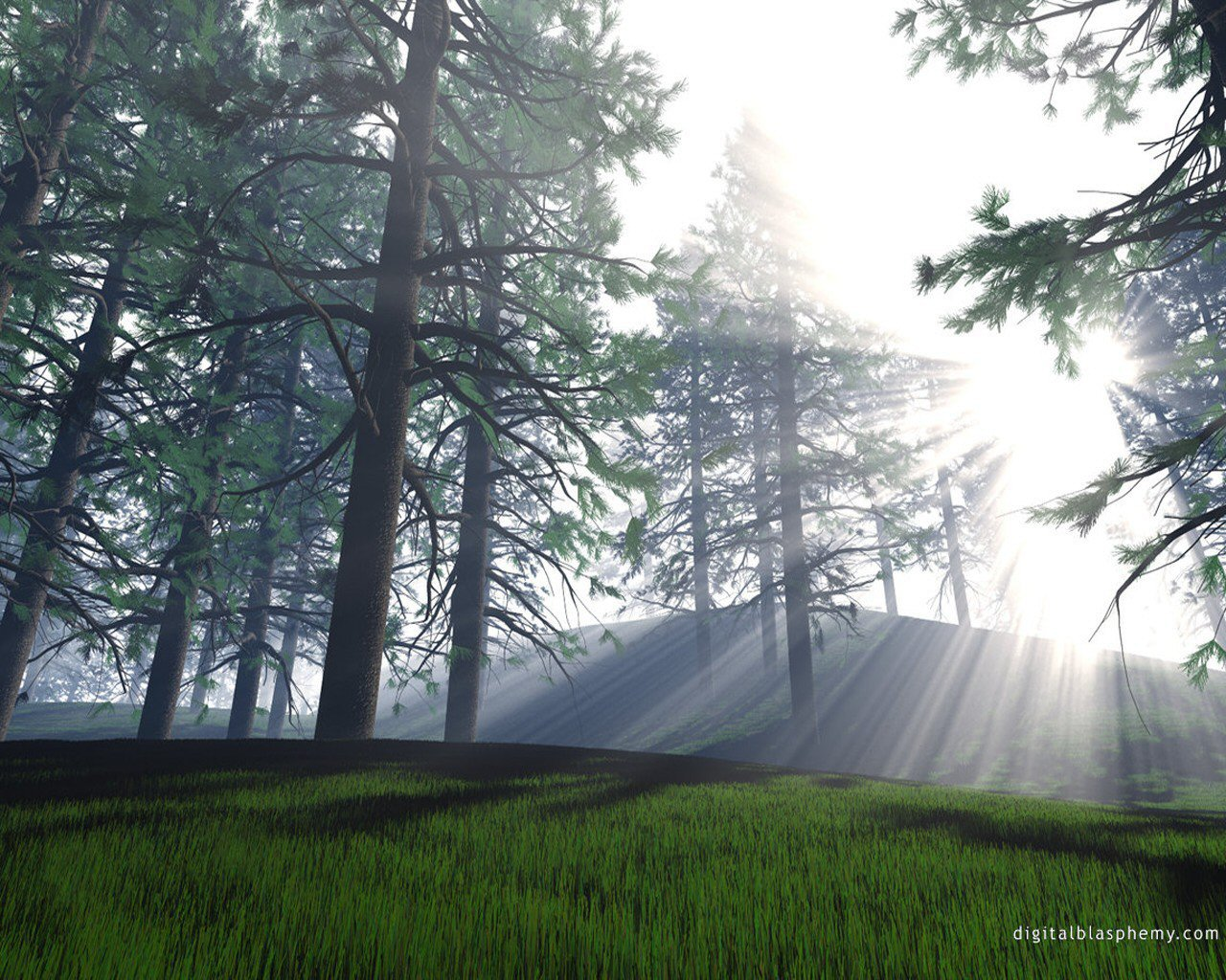 Woodland And Dappled Light