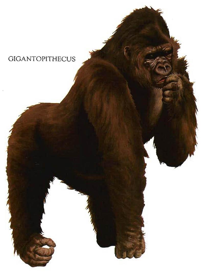 Gigantopithecus Gorilla