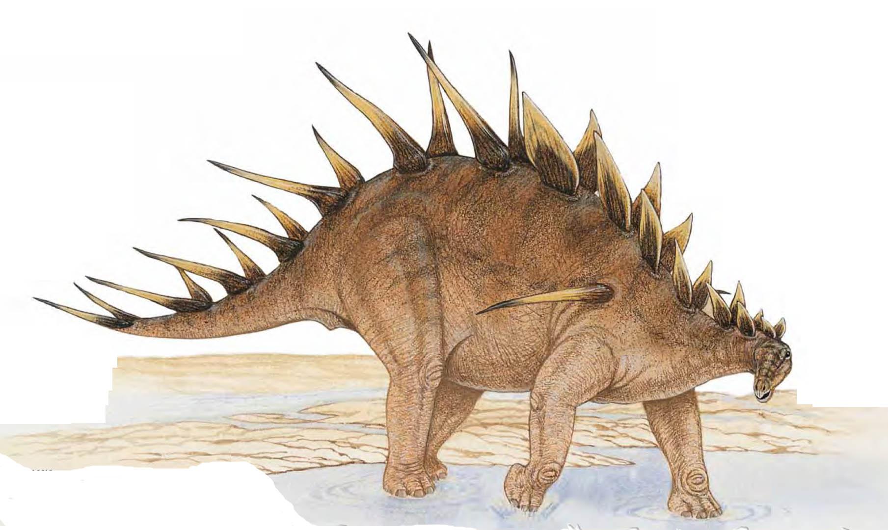 Kentrosaurus Spikey Lizard