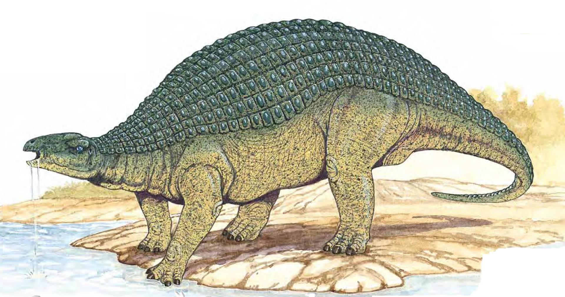 Nodosaurus Drinking From Pool