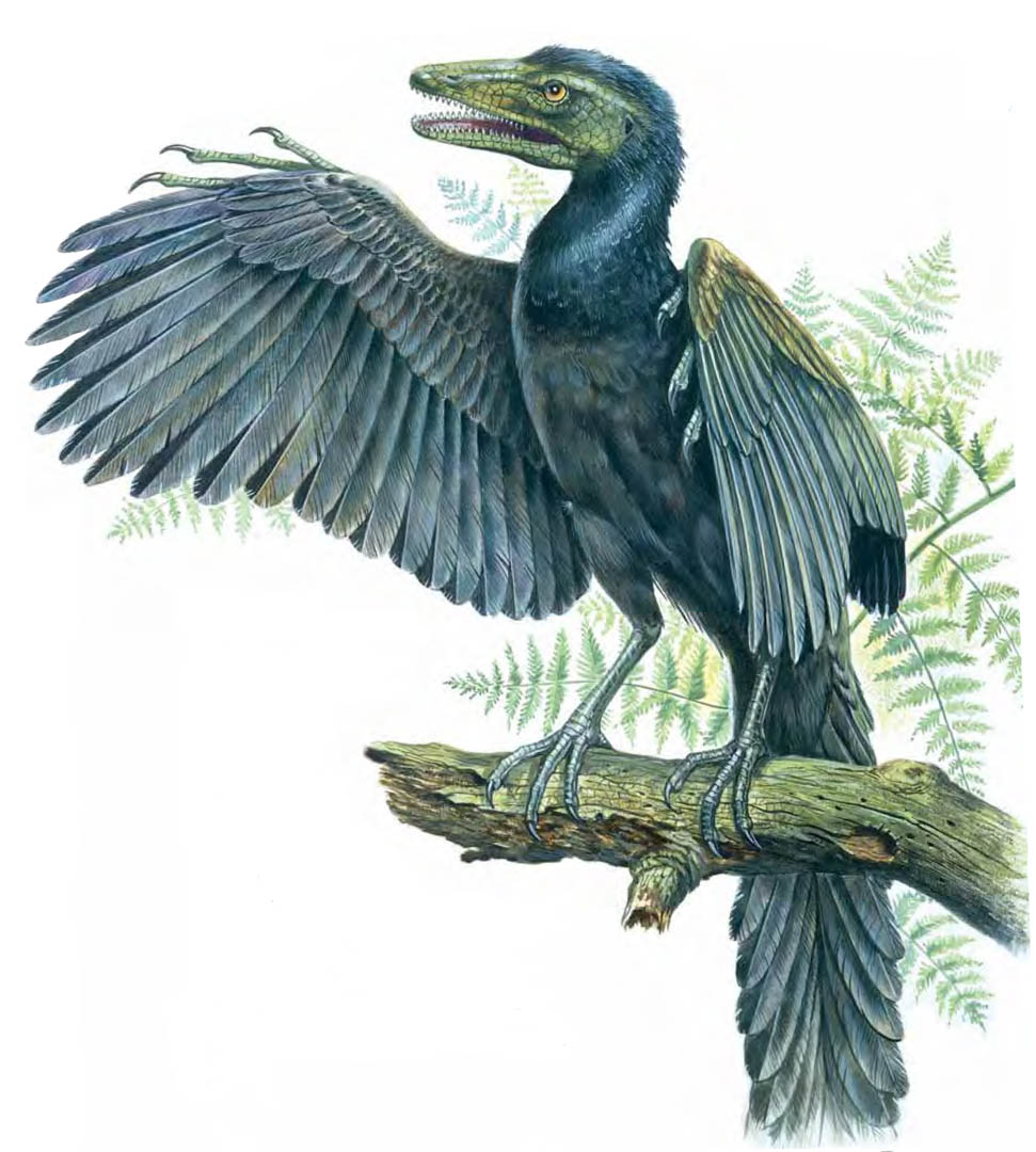 Blue Feathered Archaeopteryx